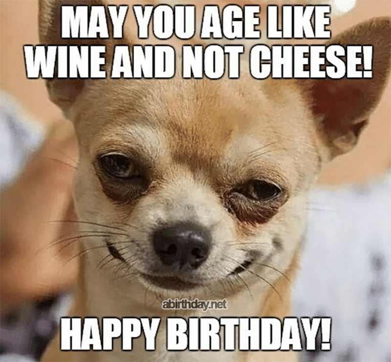 Chihuahua Birthday Meme